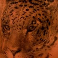 mlto realistico dettagliato e dipinto nero e bianco animale  leopardo tatuaggio su lato