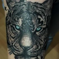 Art style colored tattoo fo tiger with blue eyes