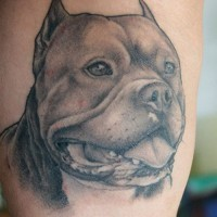 Awesome gray-ink Rottweiler dog tattoo