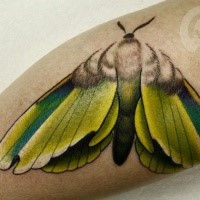 Beautiful looking colored leg tattoo of butterfly