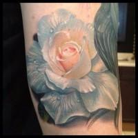 bellissimo dipinto colorato dettagliato rosa con gocce d' acqua tatuaggio su braccio