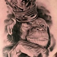 bellissimo realistico inchiostro grigio schimpanze` in corona tatuaggio su scapola