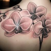 Schönes realistisches rosa Orchideen Tattoo am Rücken