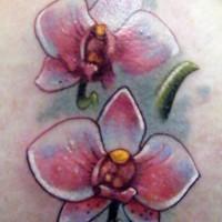 Beautiful white orchids tattoo