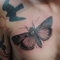 Black and gray style very detailed chest tattoo of big butterfly