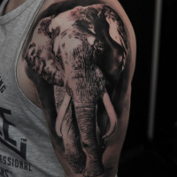 Black and whit elephant tattoo on shoulder