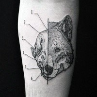 Black ink separated linework style forearm tattoo of animal skull with fox head