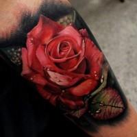 mozzafiato molto dettagliato naturale colorato rosa con gocce d'acqua tatuaggio su braccio