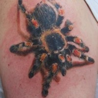 Coloured tarantula spider tattoo