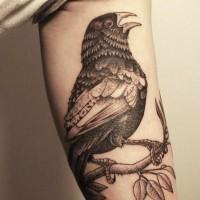 bel uccello corvo tatuaggio per uomo su braccio