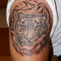 carino disegno colorato tigre  con bellissimi occhi blu tatuaggio su spalla