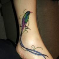 carino uccello kolibri tatuaggio disegno per ragazza su piede