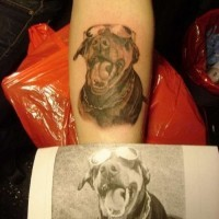 Cute gray-ink doberman in glasses tattoo on arm by photo