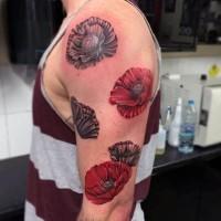 Detaillierte realistische gefärbte  Mohnblumen Tattoo am Arm