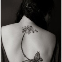 Elegant orchid with roots tattoo on back