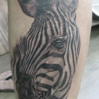 Fantastic designed very detailed black and white zebra tattoo on leg