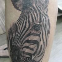 fantastico disegno molto dettagliato nero e bianco zebra tatuaggio su gamba