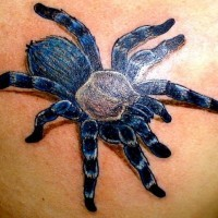 Great blue tarantula tattoo