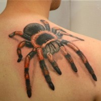 Great colorful tarantula on back