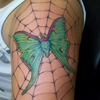 Green moth in spider web tattoo
