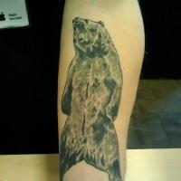 Unterarm Tattoo von Grizzlybär
