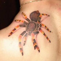 Impressive colored big 3D jungle spider tattoo on shoulder