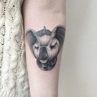 Interesting style painted little angry animal tattoo on forearm