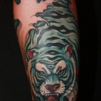 Japanese style colored forearm tattoo of angry white tiger