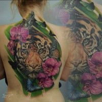 Large illustrative style whole back tattoo of tiger with flower and butterfly