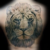 Large realistic looking whole back tattoo of lion head