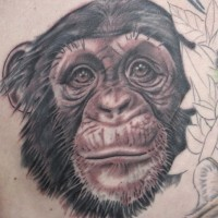 Lovely gray-ink chimpanzee head tattoo