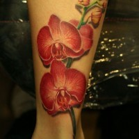 Lovely realistic red orchids tattoo on leg