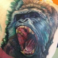 Magnificent painted realistic colored roaring gorilla tattoo on shoulder
