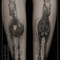 Marvelous black and white bone and muscle horses tattoo on legs