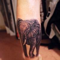 bello dipinto nero e bianco grande elefante tatuaggio su stinco