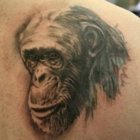 Old gray-ink chimpanzee head tattoo on right back shoulder