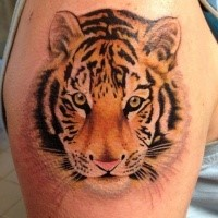 Photo like colored shoulder tattoo of cute little tiger