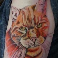 Real life like colored shoulder tattoo of nice cat