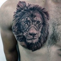 Real lifelike detailed chest tattoo of detailed lion