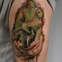 Realism style colored arm tattoo of natural lizard
