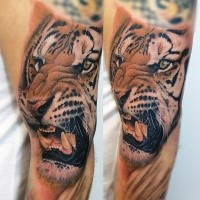 Realism style colored biceps tattoo of very detailed roaring tiger