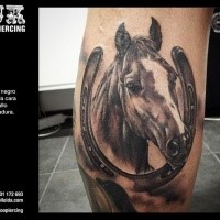 Realism style colored leg tattoo of detailed horse with horseshoe