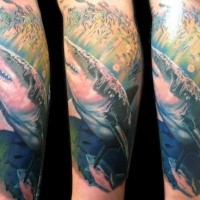 Realism style colored leg tattoo of detailed underwater shark