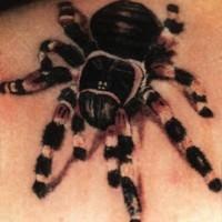 Realistic tarantula spider tattoo