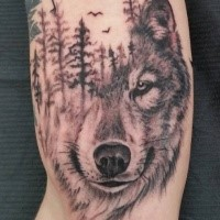 Separated black ink tattoo of wolf head with forest
