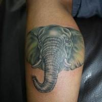 semplice grande colorato e dettagliato testa di elefante tatuaggio su gamba