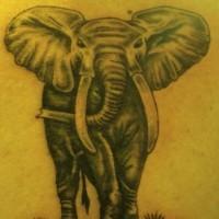 semplice dipintogrange elefante tatuaggio colorato su schiena