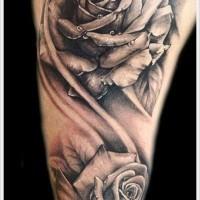Splendide  molto dettagliate rose in  nero e bianco  con gocce d'acqua tatuaggio su spalla