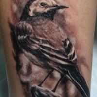 Tatuaggio bellissimo realistico il passsero