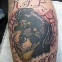 scrappy cane memoriale tatuaggio colorato